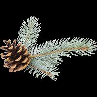 Blue Spruce: $3,000 ÷ 2 = $1,500